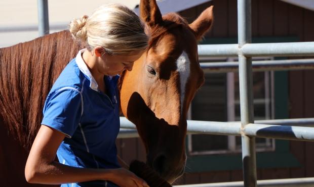 Professional horse training Novato, CA